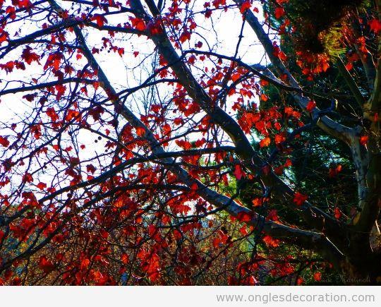 Dessin ongles inspire d'un arbre de feuiles rouges 2